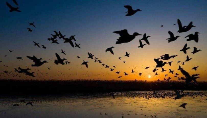 Márk Levente - Hajnal