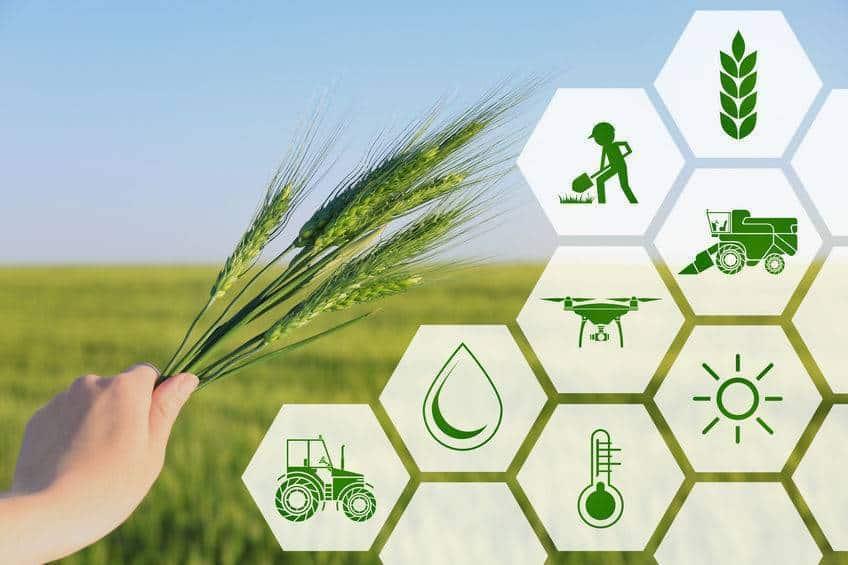 agrárinnováció