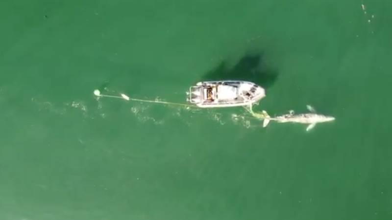 bálnamentés